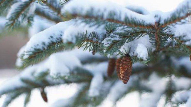 ВКрыму холодно, дождливо иветрено (прогноз погоды на23февраля)