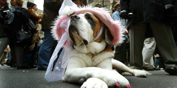 В Кременчуге питомцы коммунального приюта для собак вовсю готовятся «переодеться» на Кубок Хатико