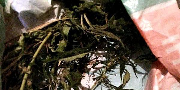 В Кременчугском районе правоохранители изъяли марихуану