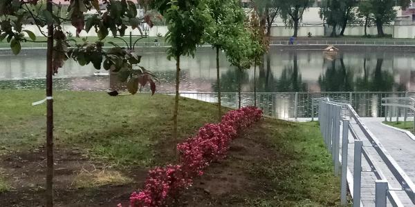 Городской сад Кременчуга превращают в ботанический сад