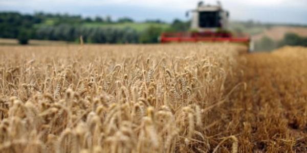 Посуха знизить врожай зернових на Полтавщини від 20 до 30%