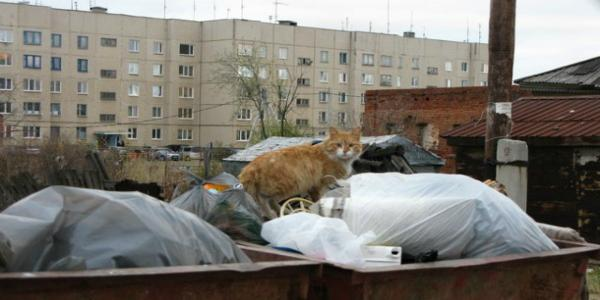 В Кременчуге кота спасли с помощью пневматического инструмента (уточнение)