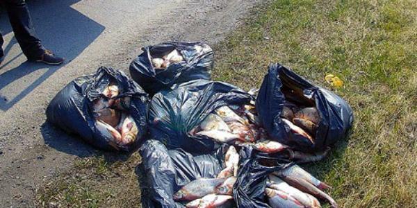 Кременчужанина поймали за незаконной перевозкой свежей рыбы