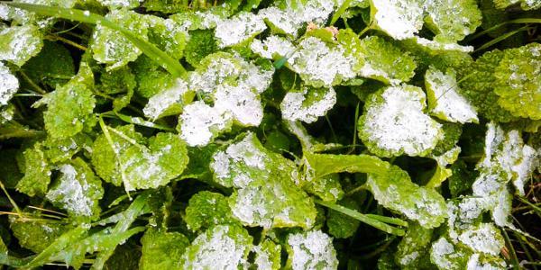 В Кременчуге в конце апреля метет снег
