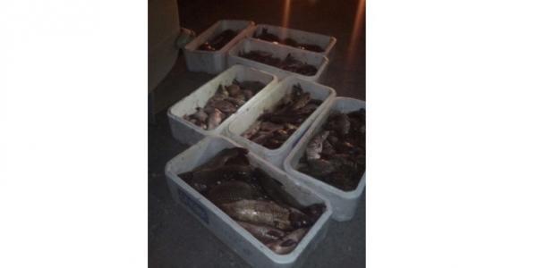 В первую неделю нереста под Кременчугом браконьеры нанесли 1 млн. гривень ущерба