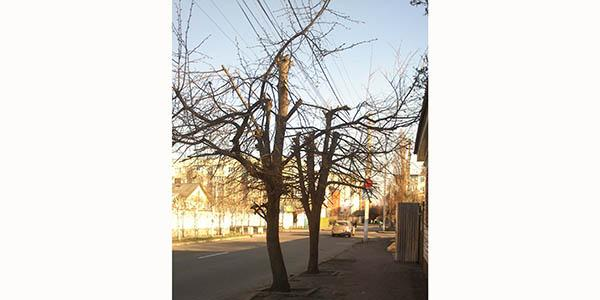 Энергетики «покромсали» деревья в центре Кременчуга