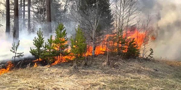 Более 10 га лесов под Кременчугом были охвачены огнем