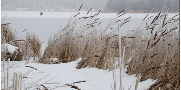 В Кременчуге усиливается северный ветер