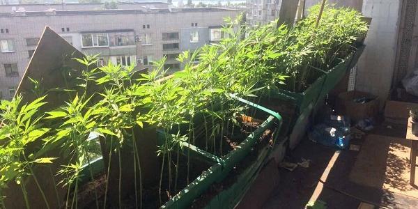 Також у чоловіка виявлено висушену марихуану та пристрої для вживання наркозілля.