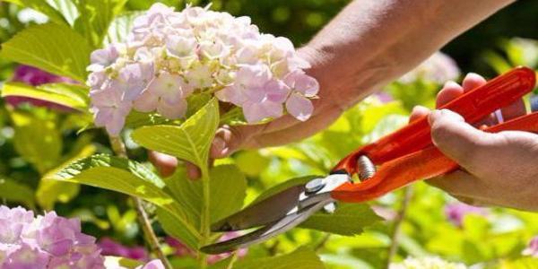 Навіщо кременчуцьким військовим ліцеїстам зрізані квіти?