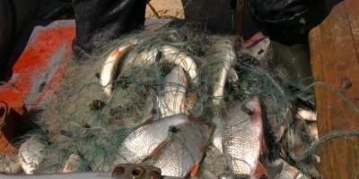 Задержаны браконьеры, выловившие 102 кг рыбы
