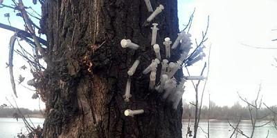 На Раковке растет тополь, утыканный шприцами