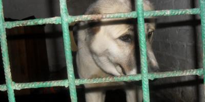 Кременчужанин: «Собаку явно оставили не «на смерть», а чтобы ее увидели и помогли