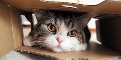 Уличных котов хотят официально признать свободными жителями Полтавы