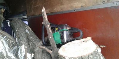 В Кременчугском районе полицейские обнаружили факт незаконной вырубки деревьев