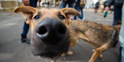 Бродячие собаки покусали троих детей