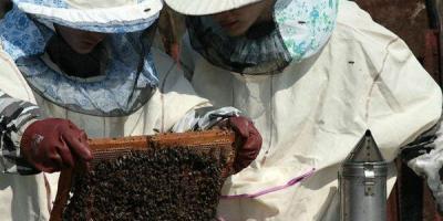 У Кременчуці відбудеться святкова хода бджолярів