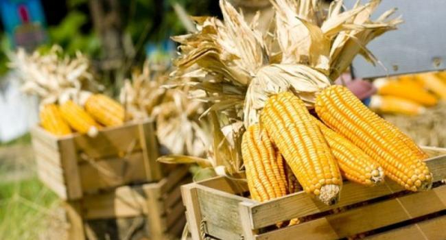 Кременчугские воры «приобщились» к сельскому хозяйству