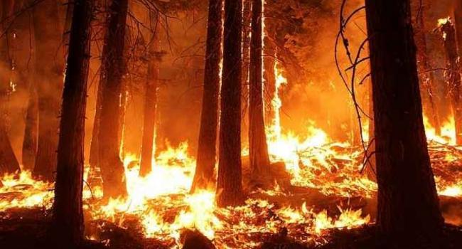В Кременчуге загорелся хвойный лес