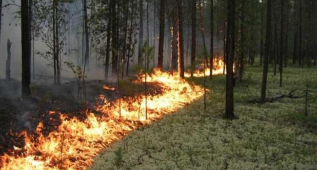 Под Кременчугом горел лесной массив