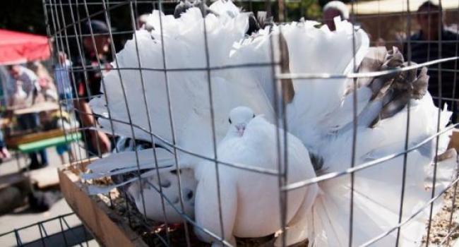 О голубях, кроликах и прочих «созданиях природы»