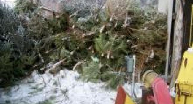 Кременчугские коммунальщики будут греться «использованными» елками