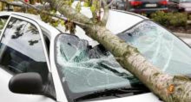 Суд не нашел виновных в деле об упавшем на машину дереве