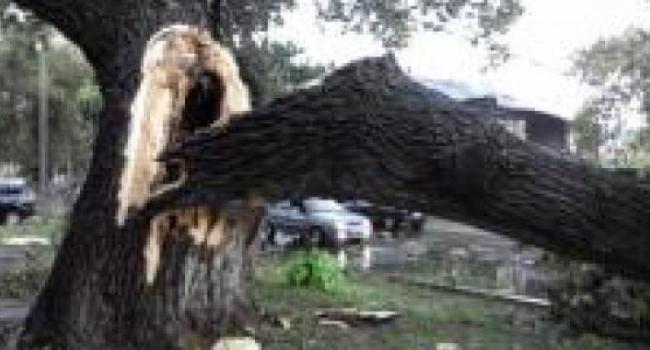В Кременчуге пилили деревья