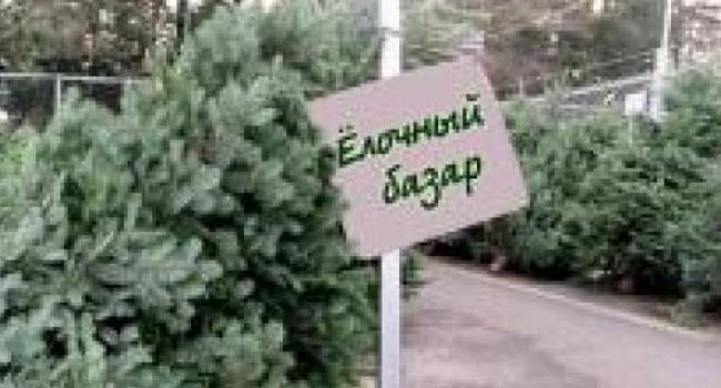 Сегодня в Кременчуге открываются «елочные базары»