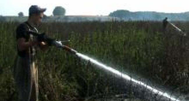 Полтавское управление ГосЧС: задымленность Кременчуга может быть из-за пожаров на торфяниках