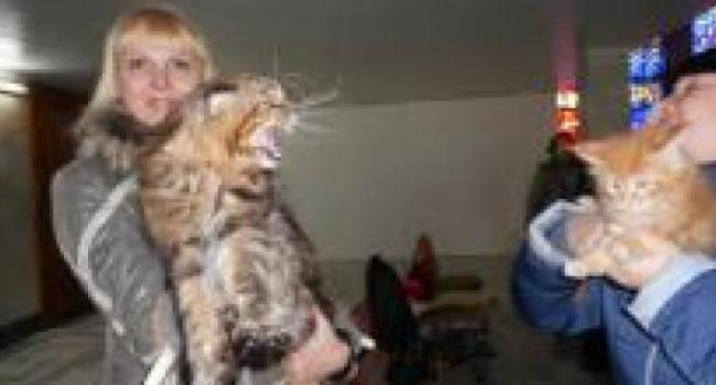 Мартовские коты в ГДК - фото