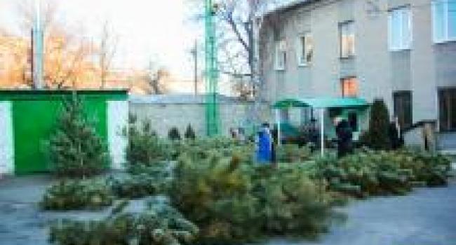 Кременчугский лесхоз: новогодних деревьев хватит всем