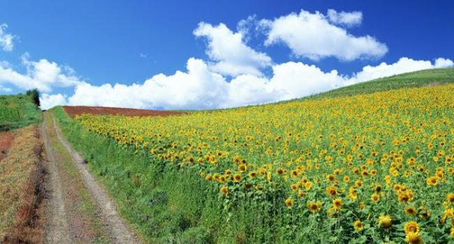 Каким будет лето: прогноз синоптиков