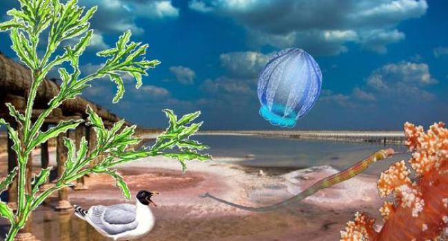Кременчуцьке водосховище стає морським лиманом із червоними та зеленими водами
