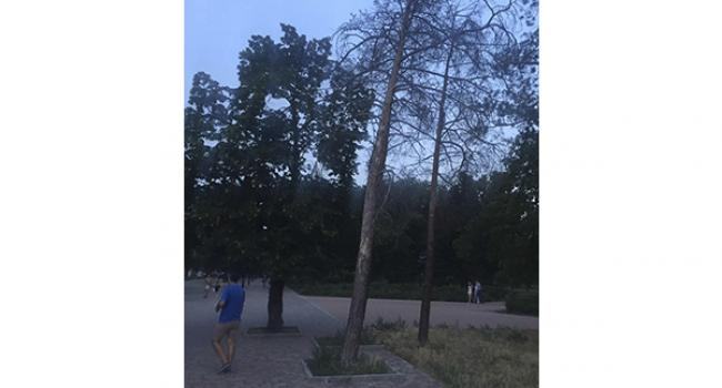 Сухостой в Приднепровском парке, похоже, Малецкого и Проценко не смущает