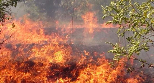 Під Кременчуком велика пожежа у лісі: дороги перекривають, людей просять покинути дачі