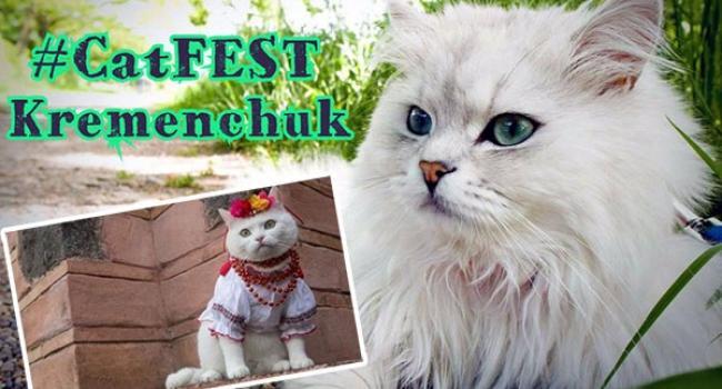 Окрім породистих та звичайних котів, головними винуватцями дійства будуть вихованці притулку тимчасового утримання КП «Спецсервіс Кременчук».