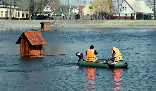 Пара лебедей в Городском саду обзавелась новым жильем