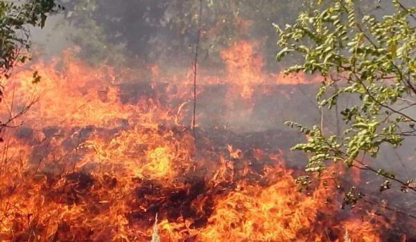Під Кременчуком велика пожежа у лісі: дороги перекривають, людей просять покинути дачі (доповнюється)