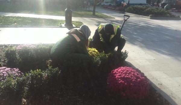 Як Кременчук купує квіти через «торги», та кому це вигідно