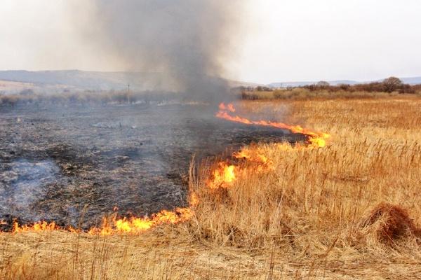 Впродовж минулої доби в області офіційно зареєстровано 10 пожеж