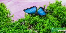 «Кременчугская газета»  разыгрывает билеты  выставку тропических бабочек и других экзотических животных