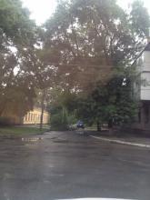 Непогода в Кременчуге: поваленные деревья и отключения света