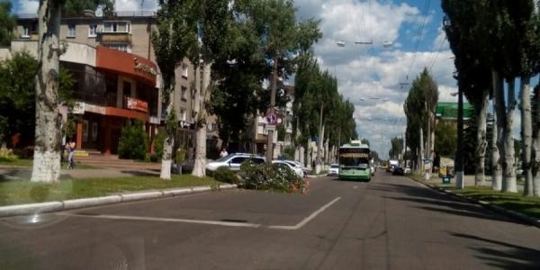 Аварийное дерево упало на машину в центре Кременчуга