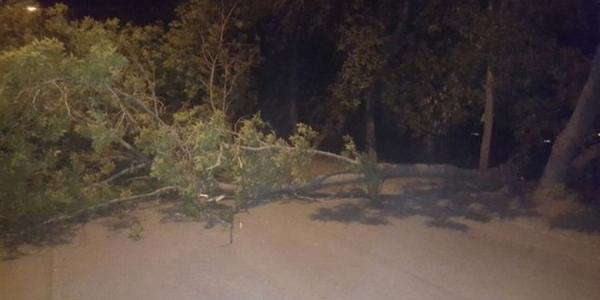Упавшее дерево в Кременчуге заблокировало ночью транспорт