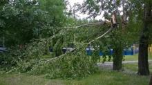 В Кременчуге упавшие ветки деревьев травмировали троих человек