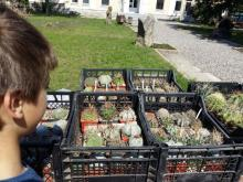 Возле краеведческого музея работает выставка-продажа кактусов