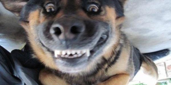На дачах под Кременчугом завелась «кусачая» собака