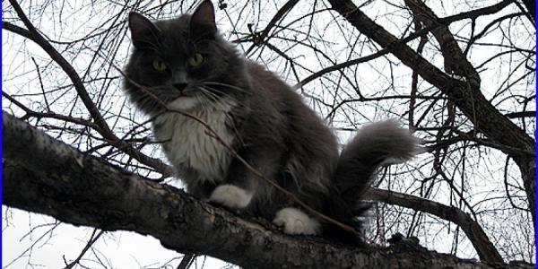 Три дня кот мяукал на дереве в центре Кременчуга