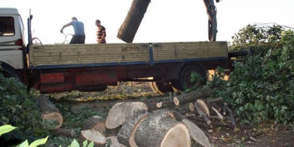 На Полтавщине задержали «лесорубов»